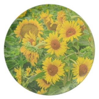 Large field of sunflowers near Moses Lake, WA 2 Plate