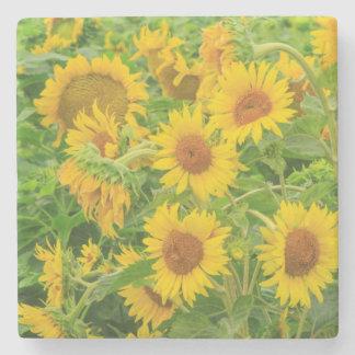 Large field of sunflowers near Moses Lake, WA 2 Stone Coaster