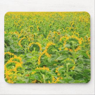 Large field of sunflowers near Moses Lake, WA 3 Mouse Mat