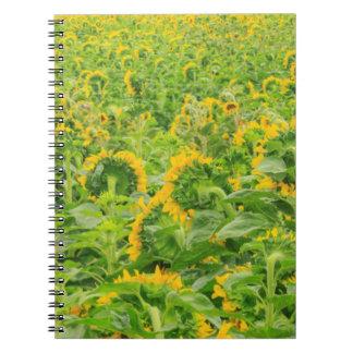 Large field of sunflowers near Moses Lake, WA 3 Notebook