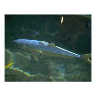 Large fish at Sea Life Park, Oahu, Hawaii, U.S.A. 21.5 Cm X 28 Cm Flyer