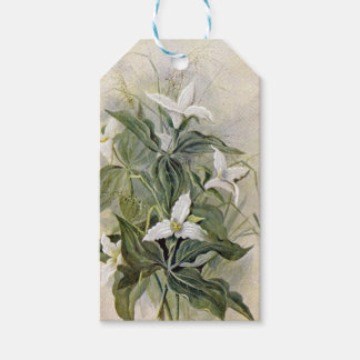 Large-Flowered Wake-Robin Botanical Gift Tags
