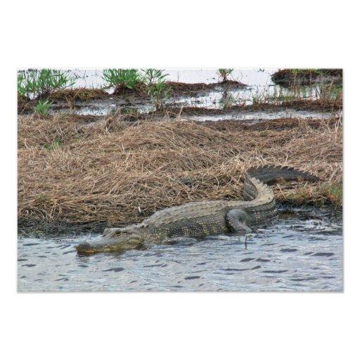 large Gator Photo Enlargement