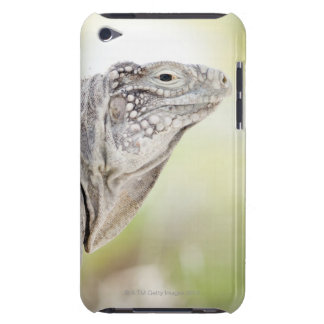 Large green Iguana basking in the sun in the Barely There iPod Case