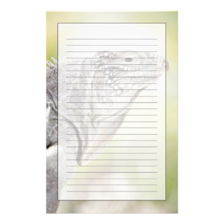Large green Iguana basking in the sun in the Customized Stationery