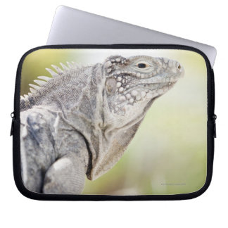 Large green Iguana basking in the sun in the Laptop Computer Sleeve