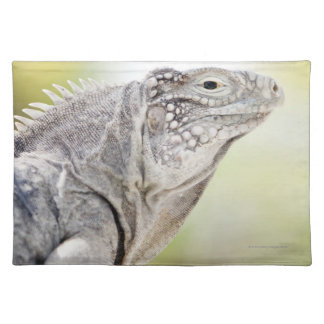 Large green Iguana basking in the sun in the Place Mat