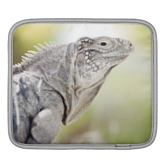 Large green Iguana basking in the sun in the Sleeves For iPads
