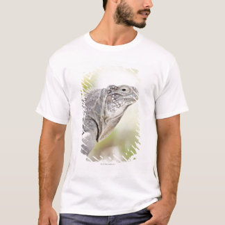 Large green Iguana basking in the sun in the T-Shirt