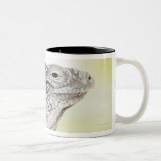 Large green Iguana basking in the sun in the Two-Tone Coffee Mug