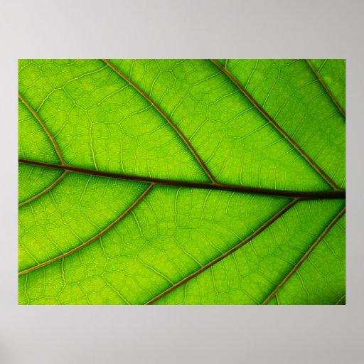 Large Green Leaf poster