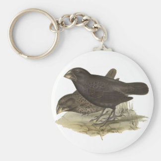 Large Ground Finch Key Chain
