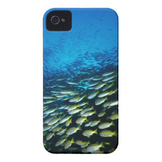 Large group of Bigeye Snapper fish swimming iPhone 4 Case-Mate Case