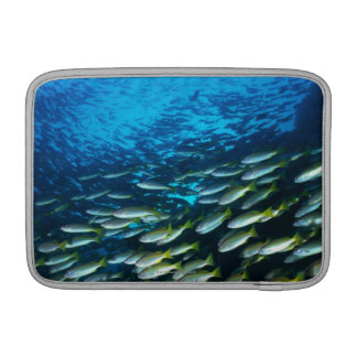 Large group of Bigeye Snapper fish swimming MacBook Sleeve
