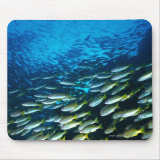 Large group of Bigeye Snapper fish swimming Mouse Mat