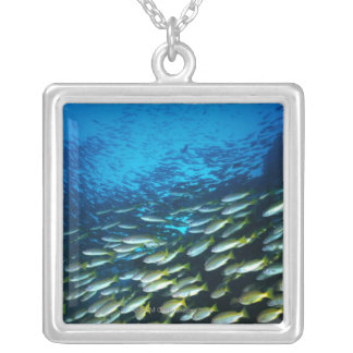 Large group of Bigeye Snapper fish swimming Silver Plated Necklace