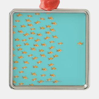 Large group of goldfish facing one lone goldfish christmas ornament