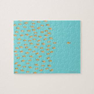 Large group of goldfish facing one lone goldfish jigsaw puzzle