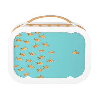 Large group of goldfish facing one lone goldfish lunch box