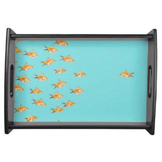 Large group of goldfish facing one lone goldfish serving tray
