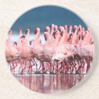 Large Group Of Lesser Flamingos Coaster