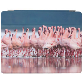 Large Group Of Lesser Flamingos iPad Cover