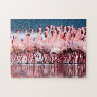 Large Group Of Lesser Flamingos Jigsaw Puzzle