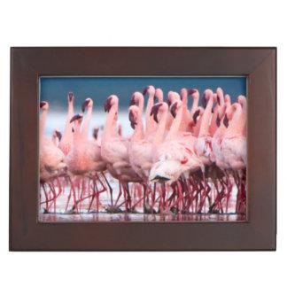 Large Group Of Lesser Flamingos Keepsake Box