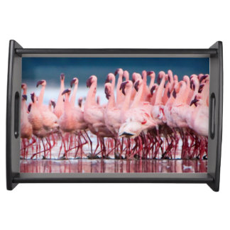 Large Group Of Lesser Flamingos Serving Tray