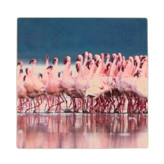Large Group Of Lesser Flamingos Wood Coaster
