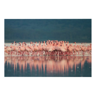 Large Group Of Lesser Flamingos Wood Print