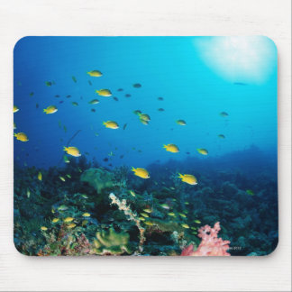 Large group of Ocellated Orange fish swimming Mouse Mat