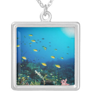 Large group of Ocellated Orange fish swimming Silver Plated Necklace