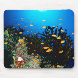 Large group of Sea Goldie fish swimming Mouse Pad