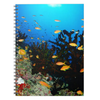 Large group of Sea Goldie fish swimming Notebooks