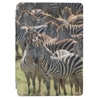 Large herd of Burchell's Zebra iPad Air Cover
