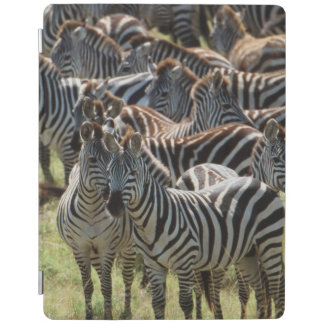 Large herd of Burchell's Zebra iPad Cover