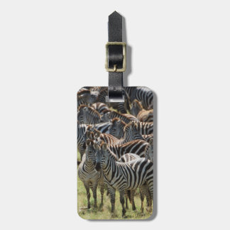 Large herd of Burchell's Zebra Luggage Tag