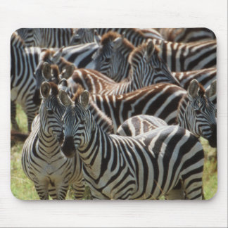 Large herd of Burchell's Zebra Mouse Mat