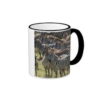 Large herd of Burchell's Zebra Coffee Mug