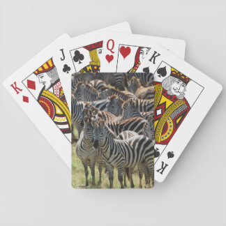 Large herd of Burchell's Zebra Playing Cards