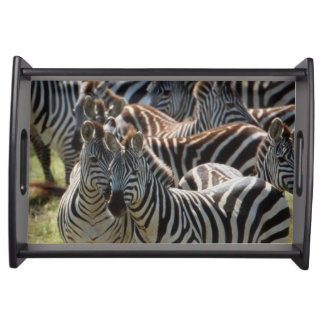 Large herd of Burchell's Zebra Serving Tray
