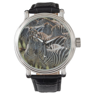 Large herd of Burchell's Zebra Wrist Watches