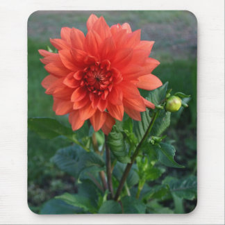 Large Orange Dahlia Flower bud Mouse Mat