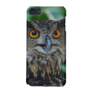 Large Owl iTouch Case iPod Touch 5G Covers