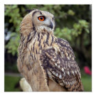 Large Owl on Fence Poster