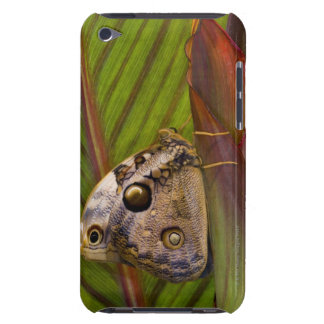 Large owlet Butterfly (Opsiphanes tamarindi) Barely There iPod Case