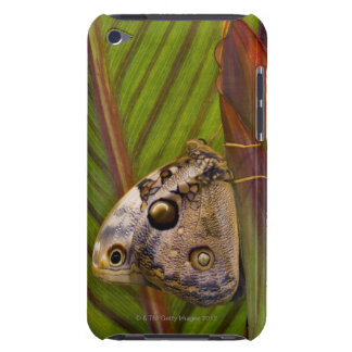 Large owlet Butterfly (Opsiphanes tamarindi) iPod Case-Mate Case