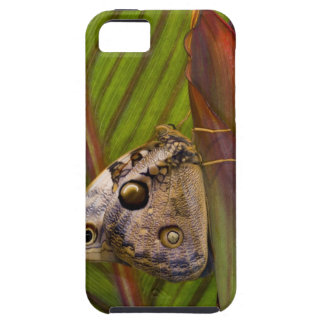Large owlet Butterfly (Opsiphanes tamarindi) iPhone 5 Case