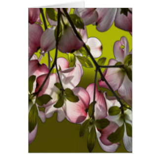 Large Pink Dogwood Flowers - Green Greeting Cards